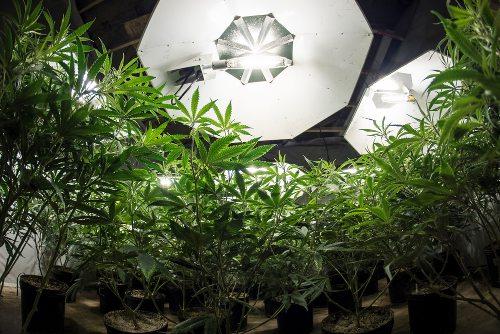 medicalmarijuanagreenhouse